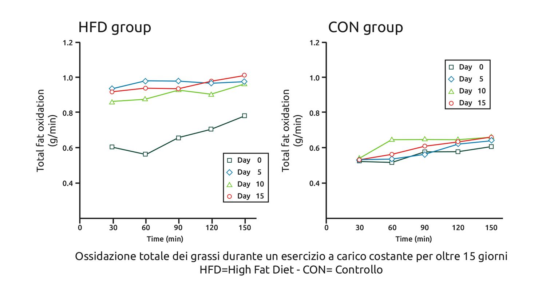 Ossidazione totale dei grassi durante un esercizio a carico costante per oltre 15 giorni